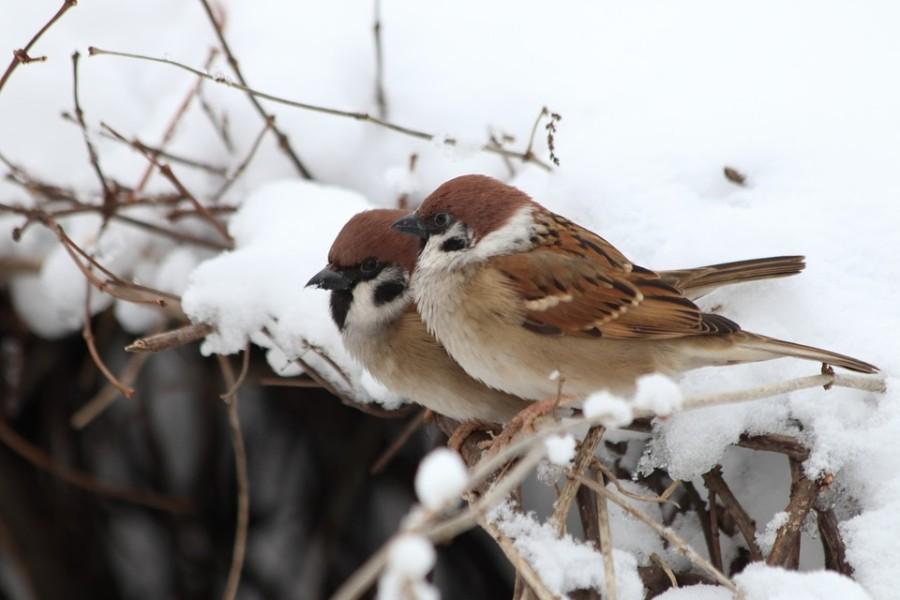 2 vogels in de winter