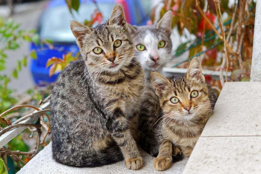 Drie katten op een trap