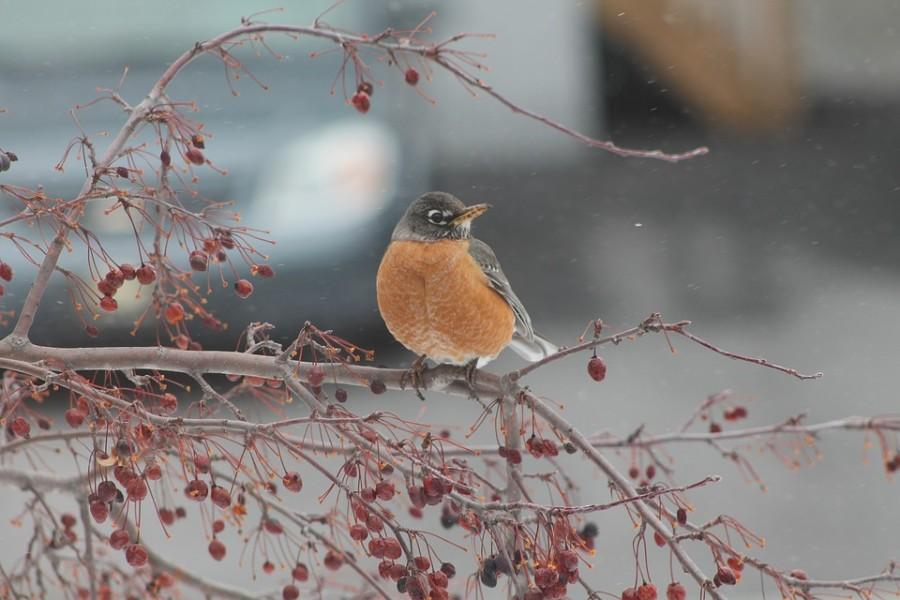Vogel op takje